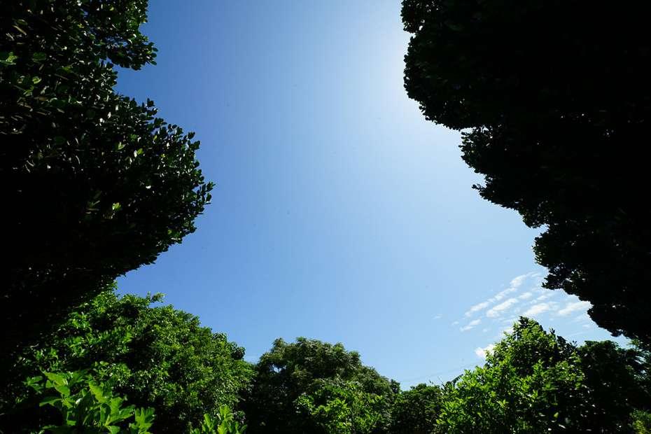 2019年 石垣島 鳩間島 初上陸 八重山諸島 自然 道 ルート